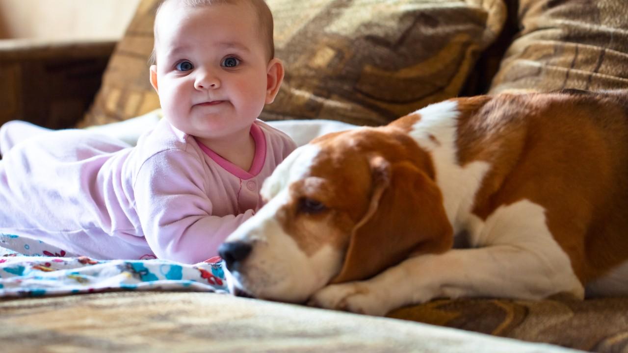 Quiero tener un bebé, ¿qué hago con mi mascota?