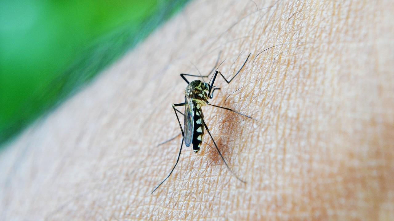 ¿Has oído hablar del dengue?