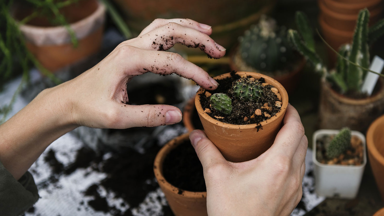 Un ejercicio que te ayuda a ti y al medio ambiente, la jardinería