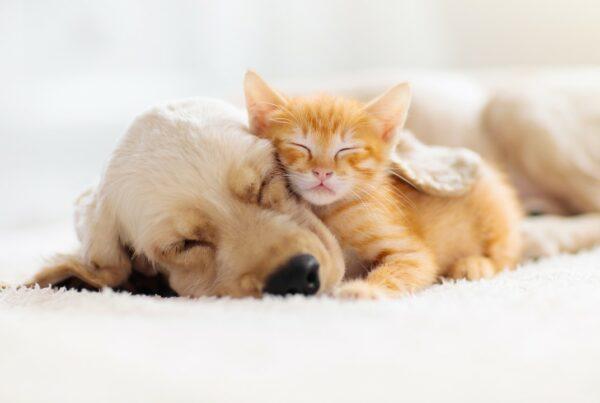 Los parásitos de las mascotas pueden causar ceguera