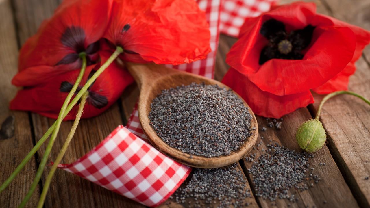 Amapola y semillas de amapola - usos medicinales