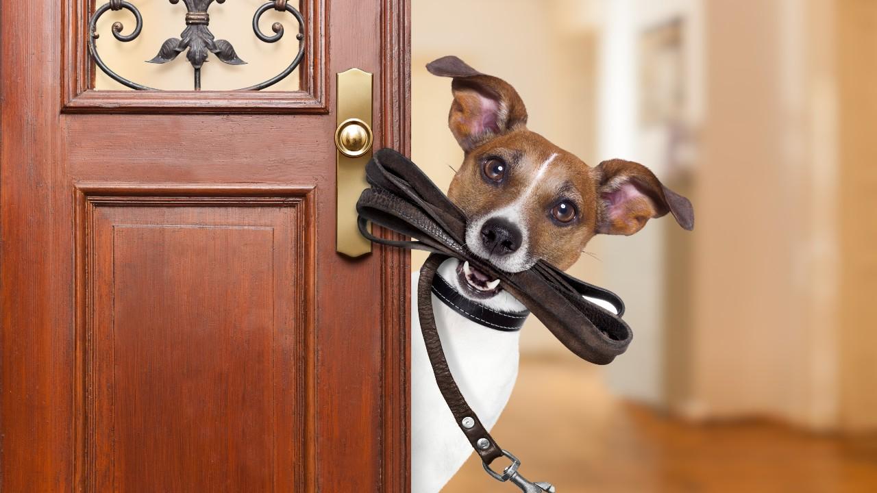 Pasear al perro mejora tu salud