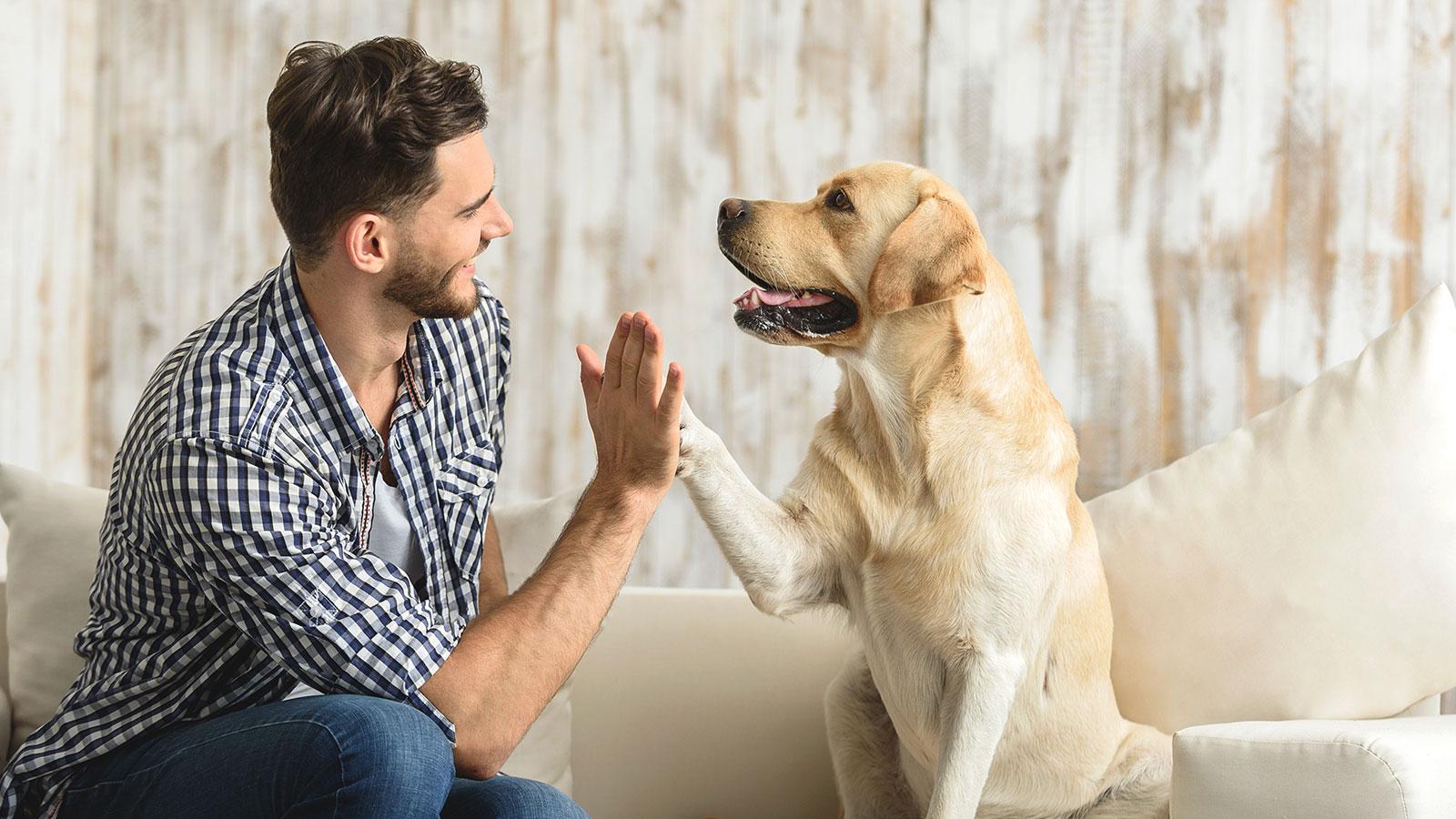 6 formas en que las mascotas son buenas para la salud