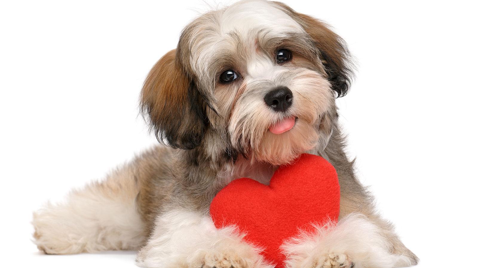 Las mascotas pueden beneficiar al corazón