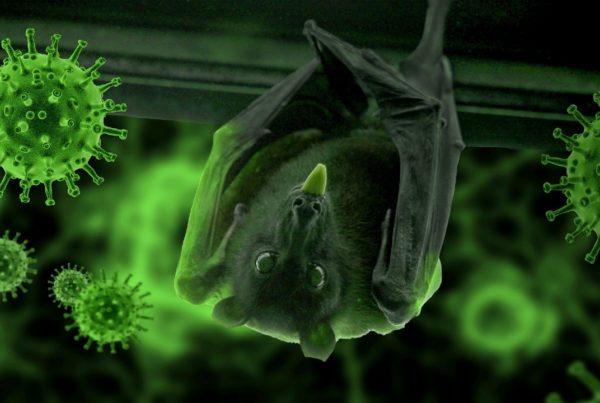 Revelaciones origen del virus