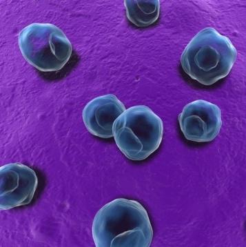 Las reinfecciones por clamidia podrían producirse desde el intestino