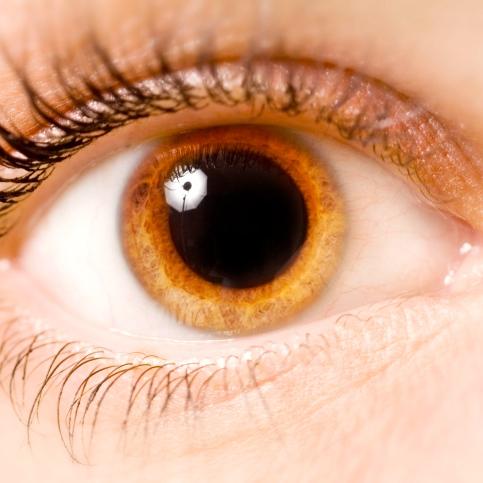 ¿Por qué es necesario dilatar las pupilas para examinar los ojos?
