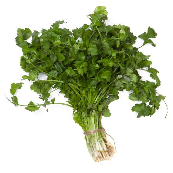 Usos medicinales del cilantro