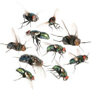 moscas volantes