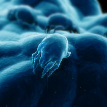 Un ingrediente del polvo casero empeora el asma alérgica