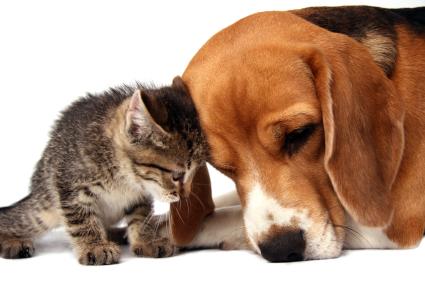 ¿Perros antialérgicos?