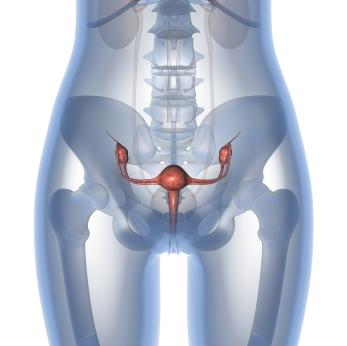 Las mujeres con cáncer del ovario a veces no reciben el tratamiento adecuado