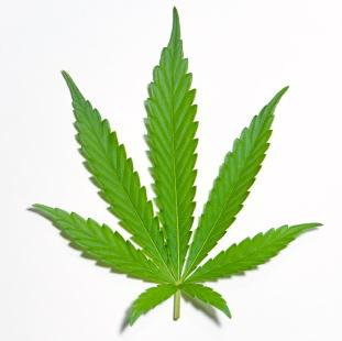 El uso de la marihuana vinculado con el cáncer testicular