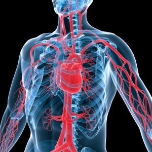 La comida chatarra perjudica tus arterias. ¡Cuídalas con una dieta sana!