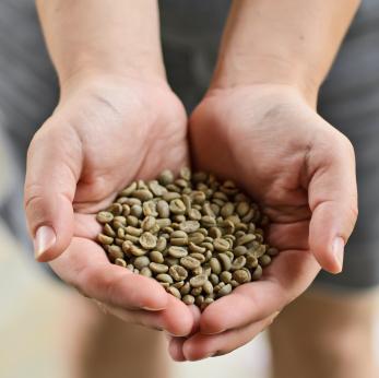 Cafe verde para bajar de peso en guatemala
