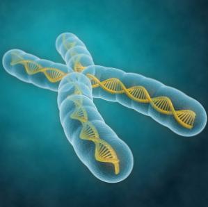 Los cromosomas pueden predecir el riesgo de desarrollar cáncer oral