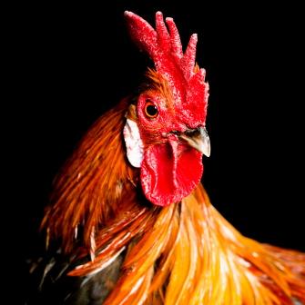 La gripe aviar es una amenaza: ¡infórmate!