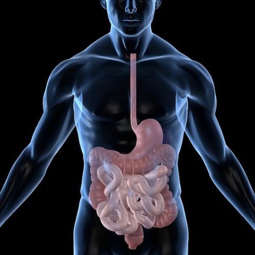 Endoscopía de Tubo Digestivo