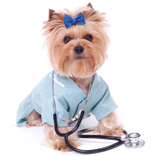 mascotas sanas