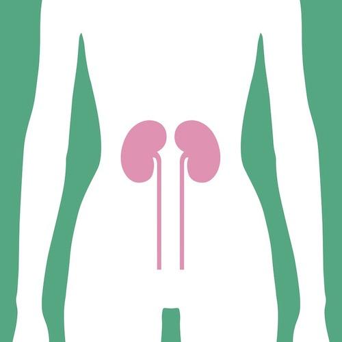 Cuando la diabetes afecta a los riñones: terapias para la función renal