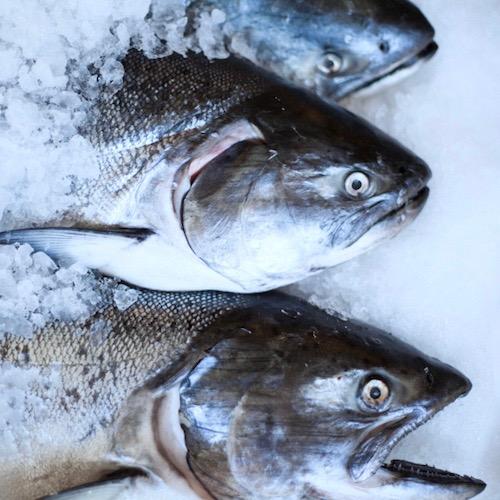 Los pescados grasos o azules: ¡qué buena pesca de omega 3!