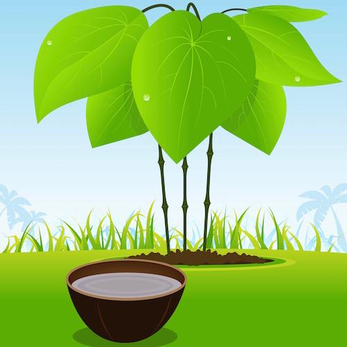 Analizan la seguridad y la eficacia de la kava para la ansiedad